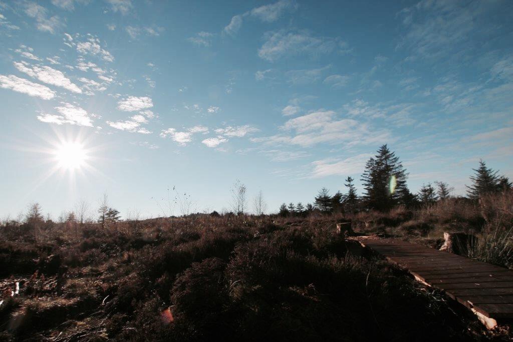 elainesrovesntroves-an-creagan-dragonfly-trail