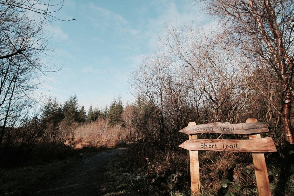 elainesrovesntroves-an-creagan-forest-trail