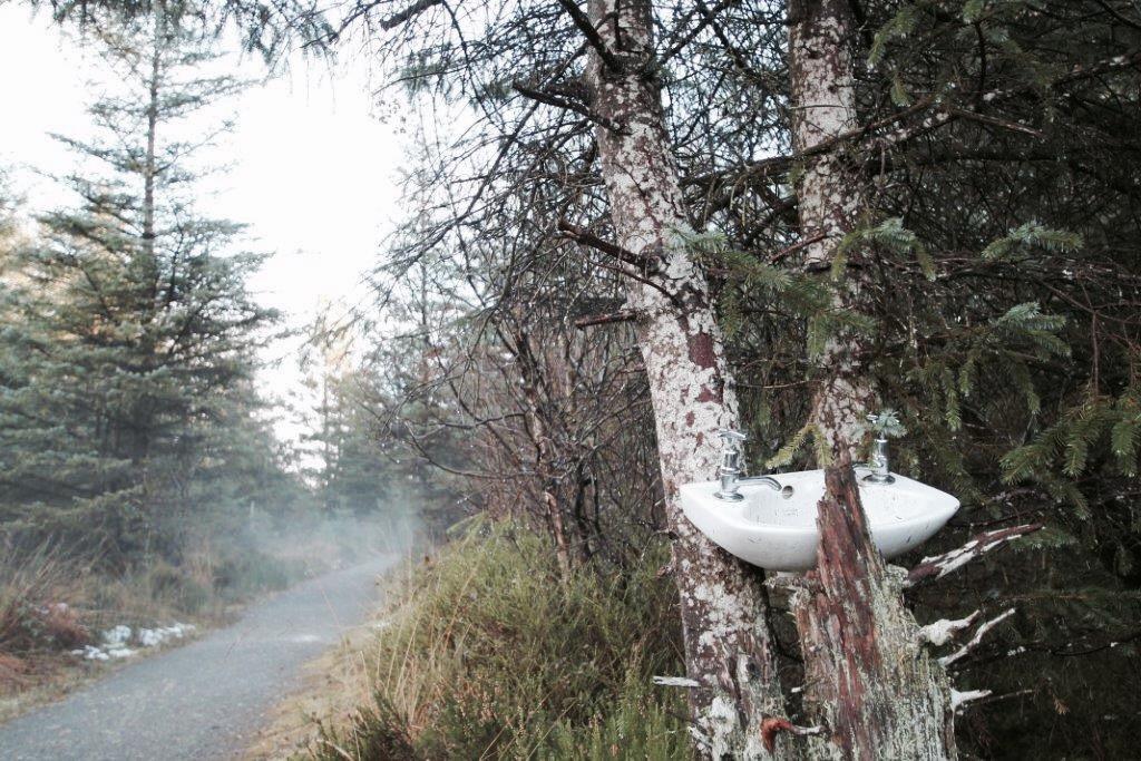 elainesrovesntroves-forest-trail-an-creagan