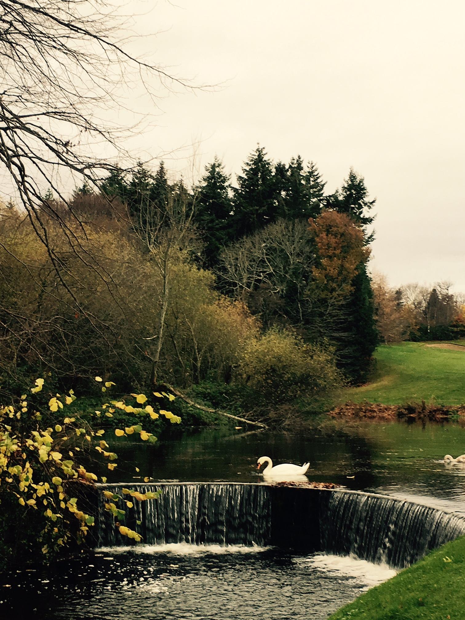druids-glen-swan-elainesrovesntroves